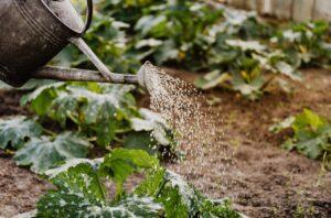 permaculture - arrosage