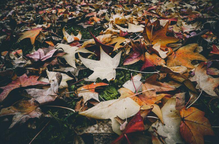 planter-automne